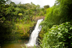 Hamakua Waterfall