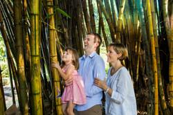 Wild Orchid Tours/Bamboo trees