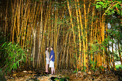 Wild Orchid Tours Bamboo Trees Hilo