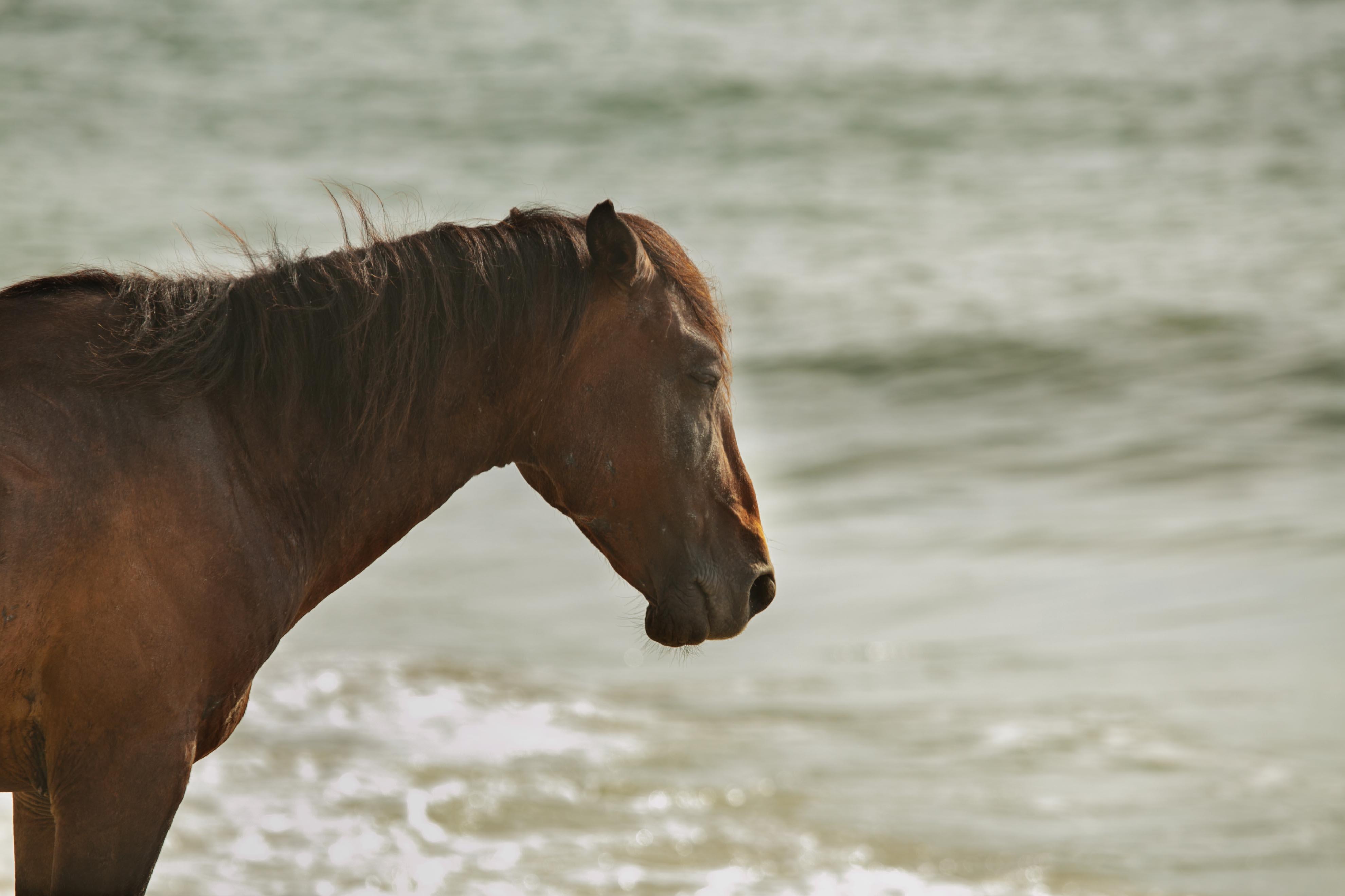 Equine Photographer OH KY WV