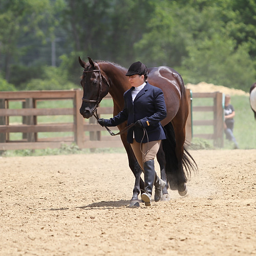 Southern Ohio Quarter Pony Assoc. Year End Slide Show