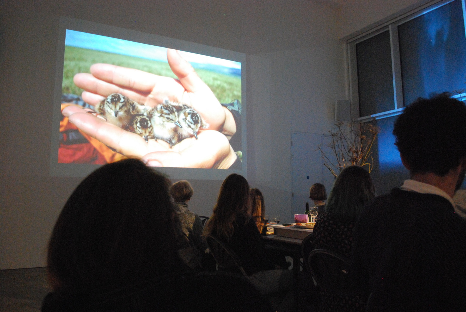 A presentation on ornithology, connection and climate-change