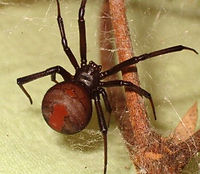 Spider Hire