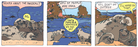 Elephant Seals Talk Pandemic