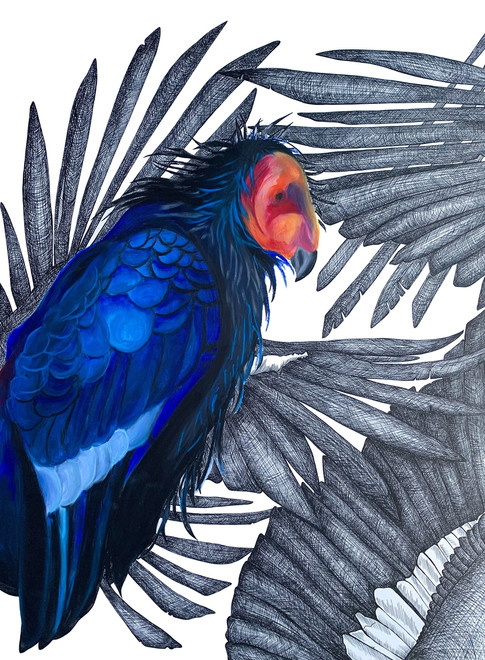 California Condor, 2021