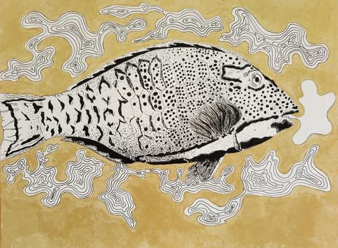Cetoscarus ocellatus, Great Barrier Reef, Australia, 2021