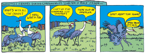 Sandhill Cranes During Coronavirus