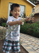 Daniel is in the garden playing with a wood stick