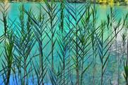 Aqua Reeds