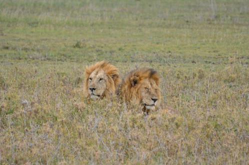 Majestic Brothers