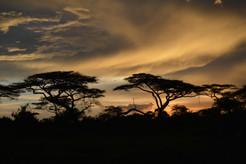 Two Baobab at Sunrise