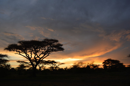 One Baobab at Sunrise