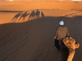 Silhouetted Camels