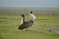 Serengeti's Tinder Profile