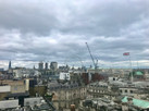 Windy Day of Cranes