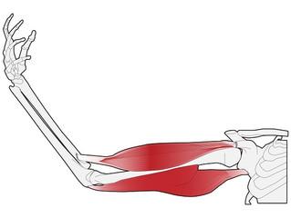 骨と筋肉。それと人生