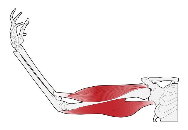 骨 筋肉 トレーニング 人生