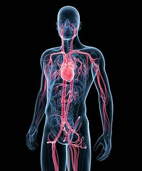 人体模型 加圧トレーニング トレーニング