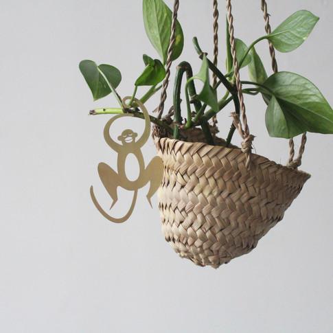 Mono, Plant Climber