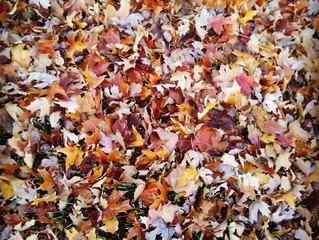 Happy Fall-oween