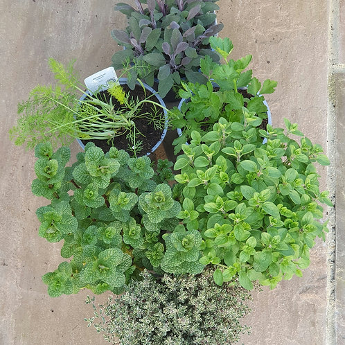 Herbs & Salad - 3 for £10
