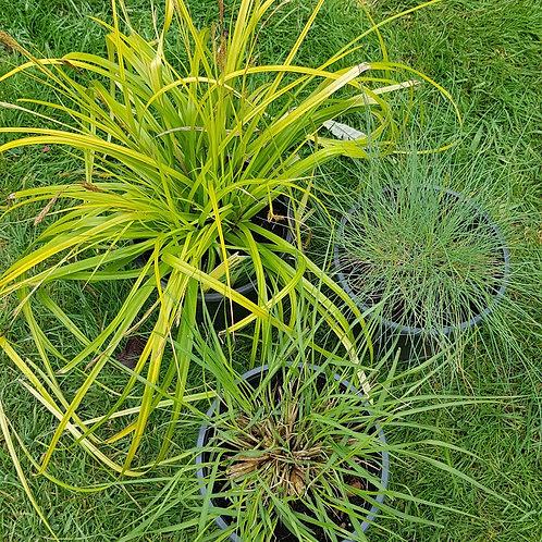 Plant & Pour - The Grass Selection