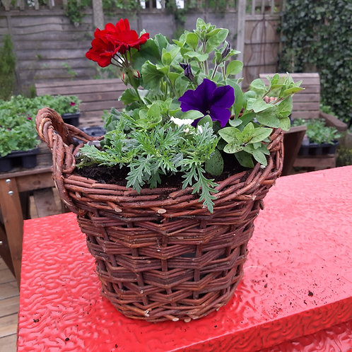 Planted Gift Baskets