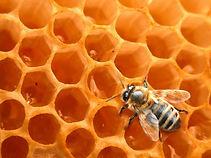 Ruche miel abeille