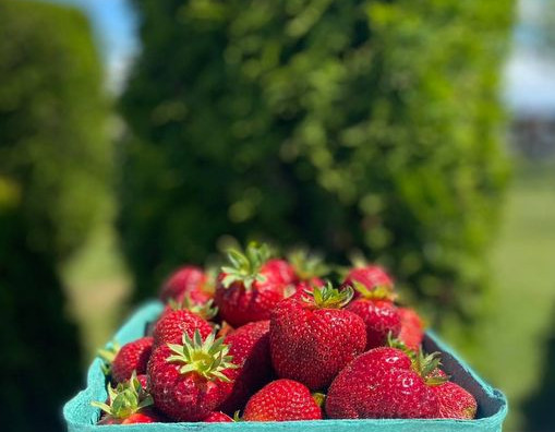 It's Berry Season in Delta!