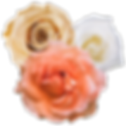 flowers-sp-02.png