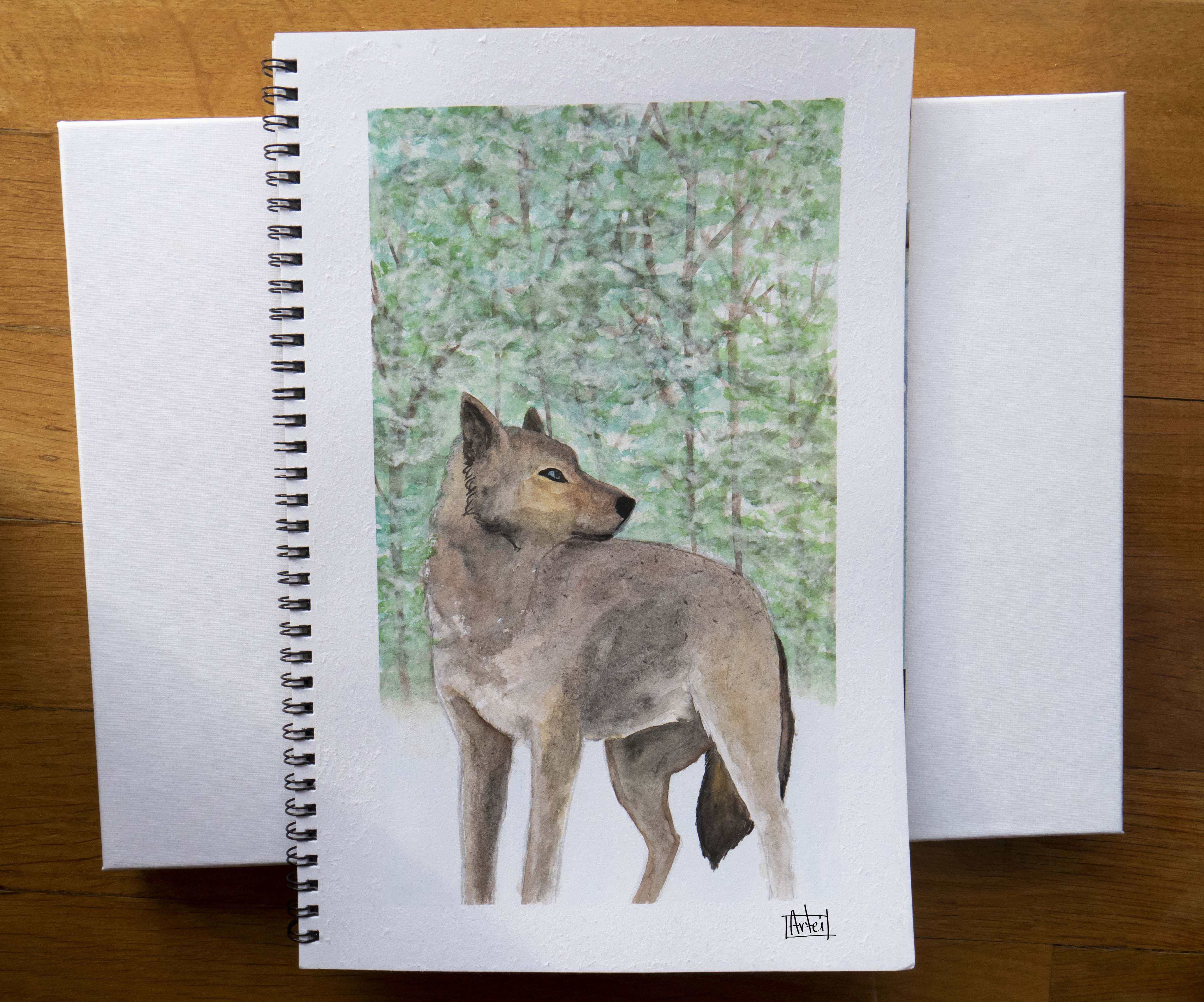 wolf watercolour jan 2019.jpg