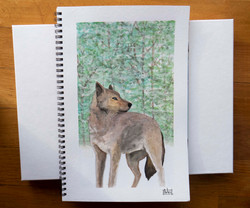 wolf watercolour jan 2019.jpg