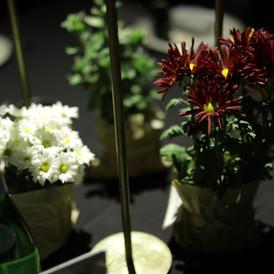 צמחי תבלין מזכרת