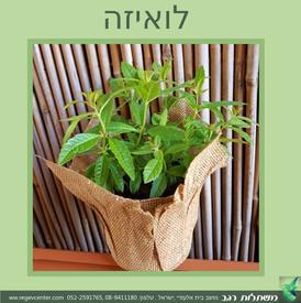 קישוט שולחן טבעי צמח