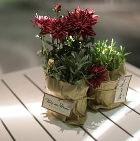 צמחים לאירוע
