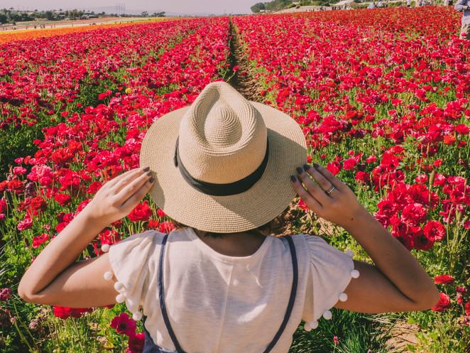 Jolene goes to the Carlsbad Flower Fields