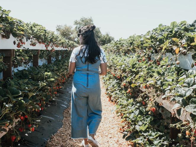 Jolene Goes Strawberry Picking