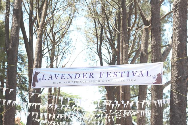 Jolene Goes to the Lavender Festival