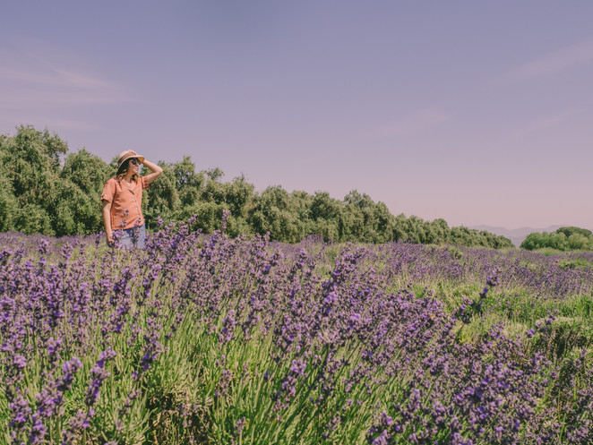 Jolene goes to the Lavender Festival 2019