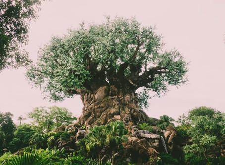 Jolene goes to Disney's Animal Kingdom
