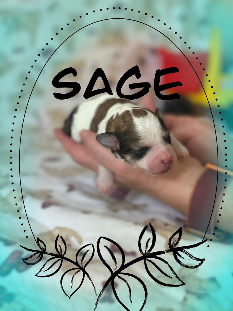 Sage (boy)