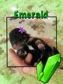 Emerald (girl)