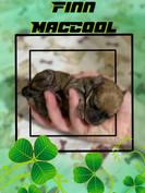 FinnMaccool (boy)