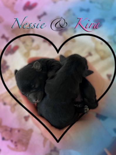 Nessie (boy) and Kira (girl)