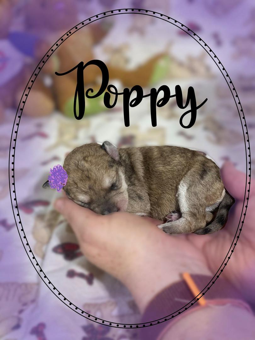 Poppy (girl)