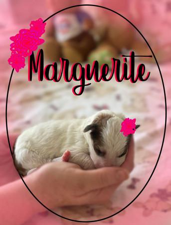 Marguerite (girl)