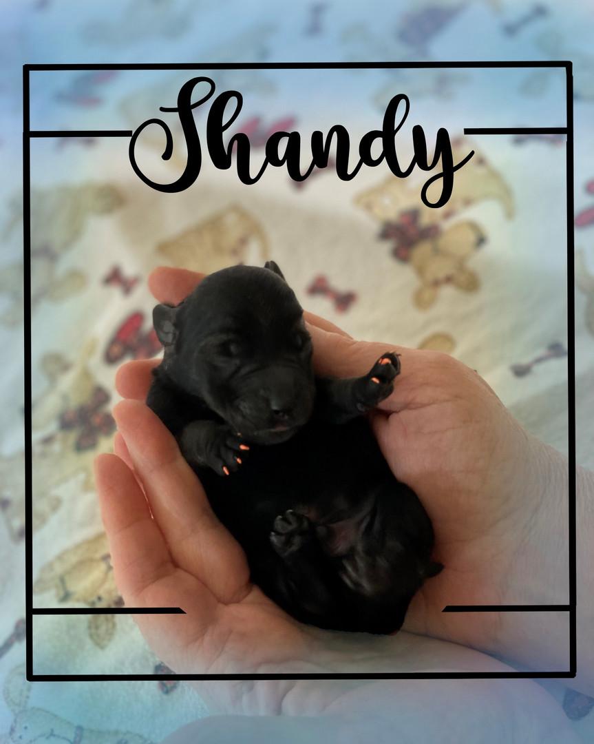 Shandy (boy)