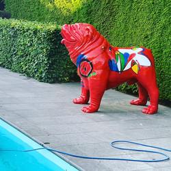 Bulldog 'POOLdog'!