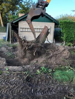 bomen uitgraven