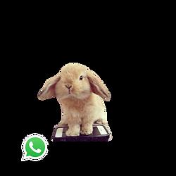 Eurolub Whatsapp Logo 02.png